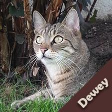 Dewey_Kater