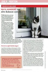 Katze_wandert_ins_alte_Zuhause_zurück