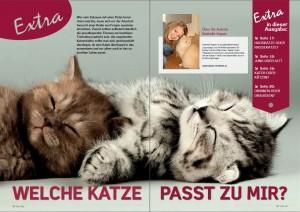 Welche_Katze_2.15_1