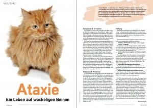 Ataxie_Katze