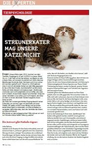 Streunerkater_mag_Katze_nicht