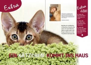 Kätzchen_zieht_ein_1