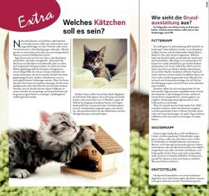 Kätzchen_zieht_ein_2